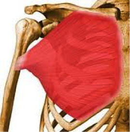 intelligent chest training02
